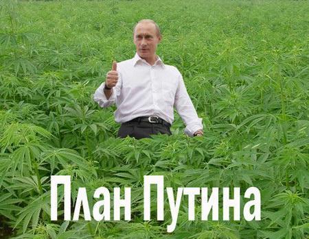 "Яценюк сравнил Путина с наркоманом: ""Он постоянно нуждается в новых аннексиях"", - Die Welt - Цензор.НЕТ 1398"